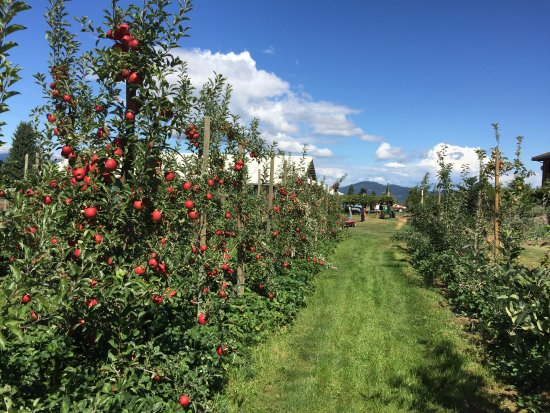 Parkdale, OR: Kiyokawa Orchards