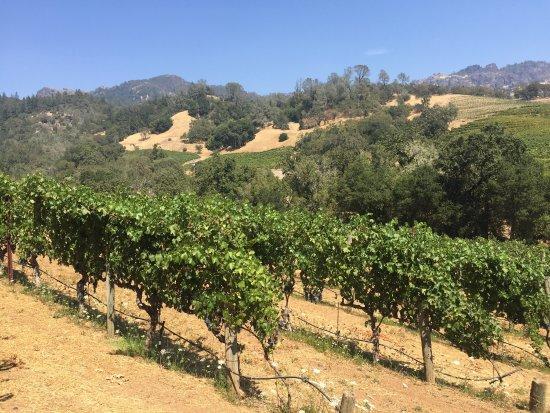 Jericho Canyon Vineyard: Beautiful vineyard, delicious wines! We walked the vineyard, tasted in cellar. Met Tara, Nick, e