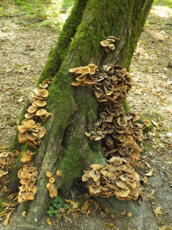 Bialowieza National Park Tours: mushrooms