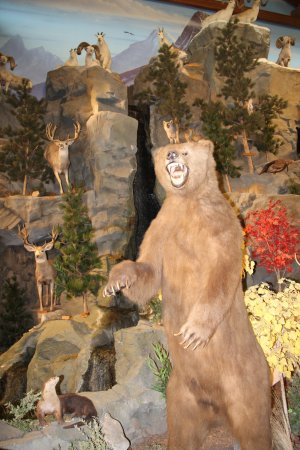 East Grand Forks, MN: Animal Displays at Cabelas