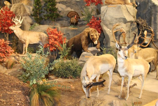 East Grand Forks, Миннесота: Animal Displays at Cabelas