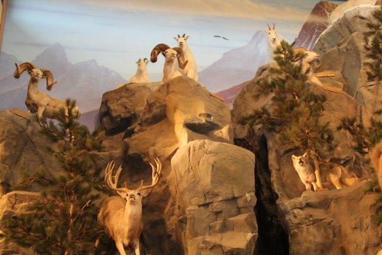 East Grand Forks, MN : Animal Displays at Cabelas