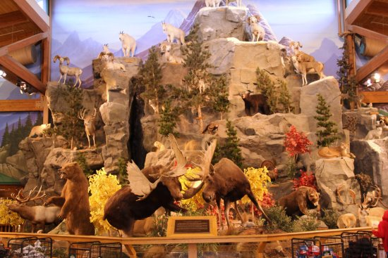 East Grand Forks, MN: The main display at Cabela's