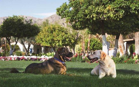 Ла-Кинта, Калифорния: Pet Friendly