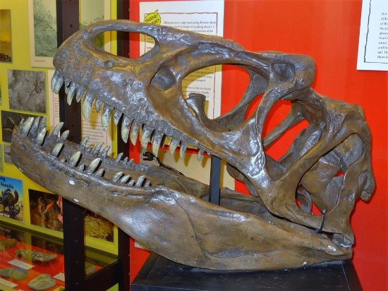The Dinosaur Museum : some of the exibits