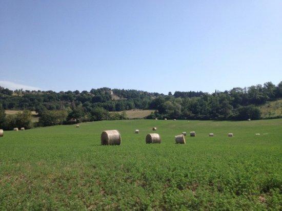 Agriturismo Le Casacce: Hillside drive to Le Casacce