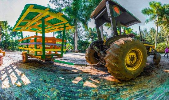 Pinto's Farm