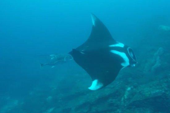 Панг-Нга, Таиланд: manta ray at similan