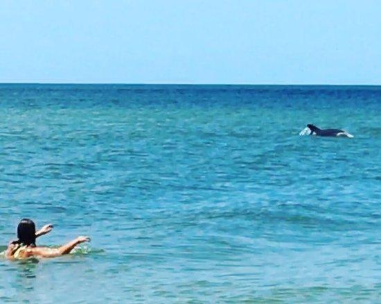Madeira Beach: Dolphins :)