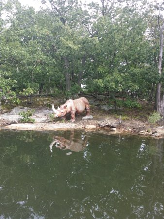 Rye, estado de Nueva York: 1 of about 5 'animals' to see on lake ride