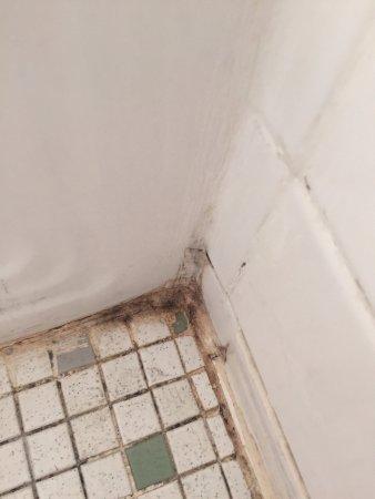 Greenport, NY: Mold in bathroom