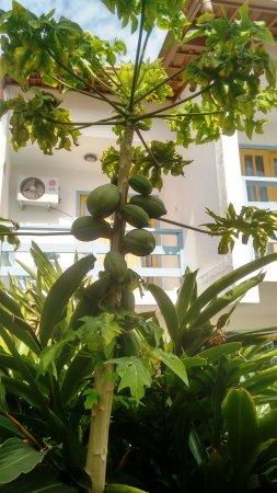 Hotel Estalagem: Jardim