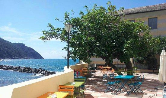 la terrazza del fico - Picture of Tapullo Shop & Taste, Sestri ...