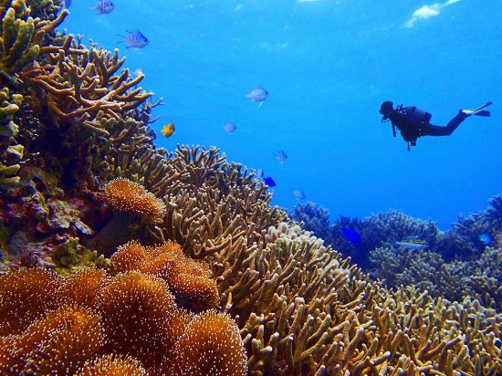 Hopkins, Belize : Belize Underwater