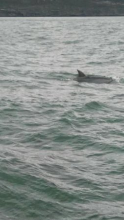 Carrigaholt, Irlanda: Had an amazing trip out yesterday at 11 saw loads. Dolphins were amazing 😄😍