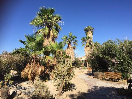 Sunnyvale Garden Suites Hotel - Joshua Tree National Park: Garden