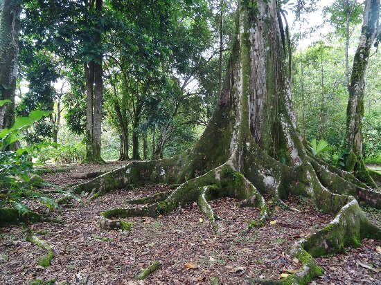 Isla San Cristobal, Panama : Jungle at Dolphin Bay Cabanas