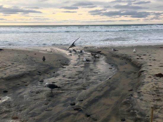Solana Beach, CA: photo3.jpg