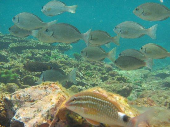 Kushimoto Diving Park (串本町) - 0 則旅客評論和比價