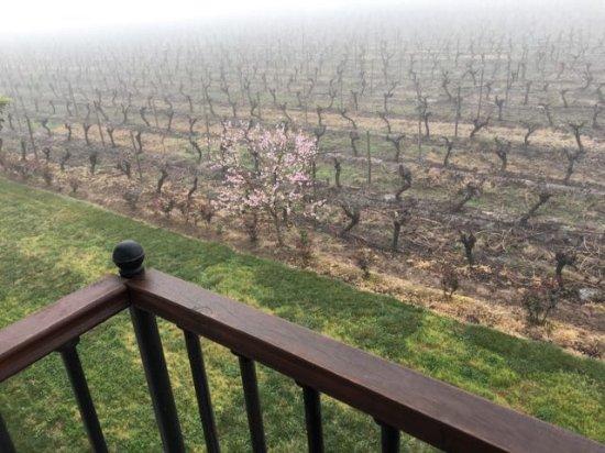 Hotel TerraVina: 2nd floor room overlooking the vineyards morning fog.