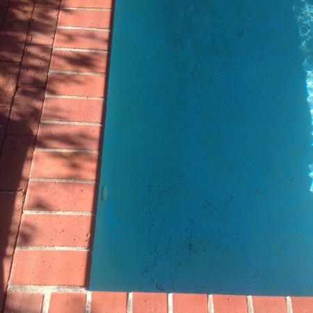 Fynbos Villa Guest House: The pool was full of debris