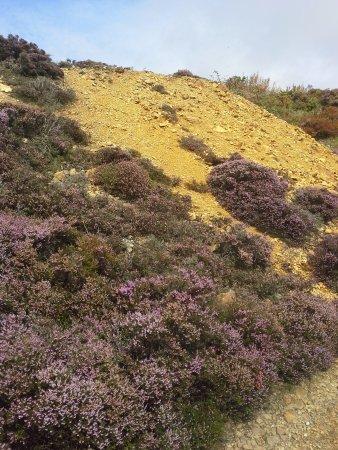 Amlwch, UK: Heather on Copper Mountain