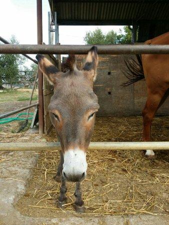 Samarcanda: Un posto bellissimo, gestito con maestria e amore da persone che amano gli animali, consigliato