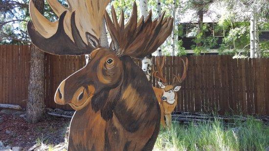 Lake City, Kolorado: Moose may visit, but Karen can guarantee you will see one here.