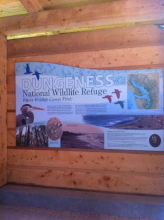Sequim, WA: List of animals to look for