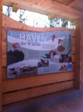 Sequim, WA: Animal information