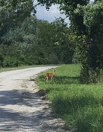 Mound City, MO: Saw a doe and twin babies