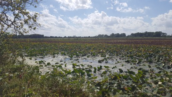 Mound City, MO: We missed the water lilies blooming