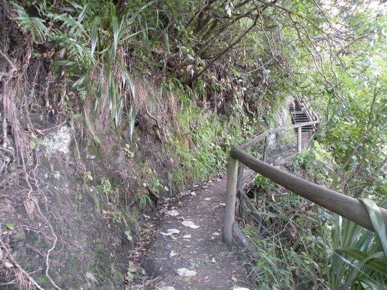 Ohope, نيوزيلندا: escaleras sobre las montañas