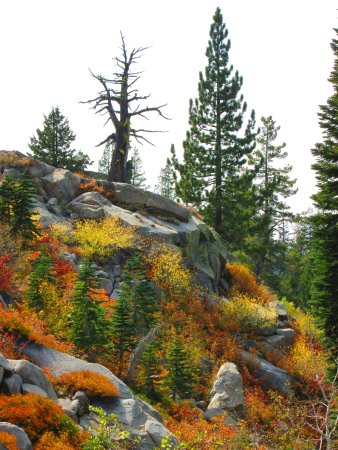 Truckee, CA: This coming down the Mt. Judah trail last fall 2015.
