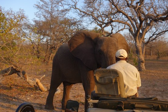 Ulusaba Private Game Reserve, Sudáfrica: Jack - our tracker and the elephant