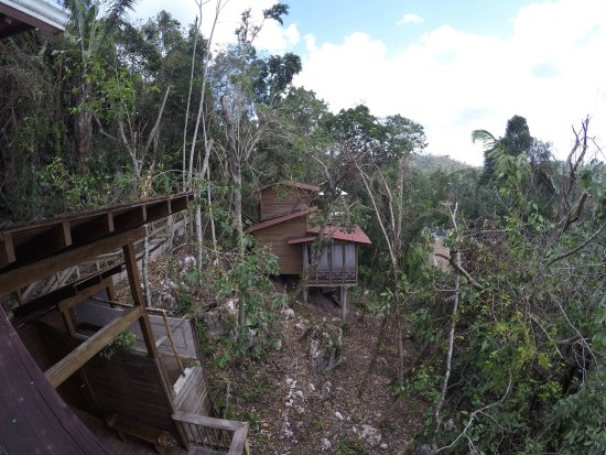 Ian Anderson's Caves Branch Jungle Lodge: Here's a view of another treehouse (ours was the last one)