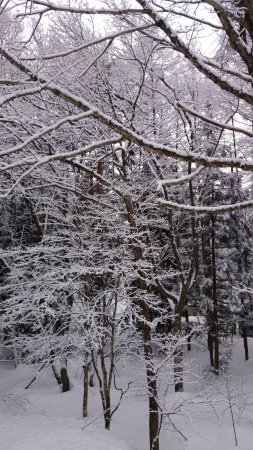 Hakuba Luna Hotel: Straight out our room window into the snowy forest
