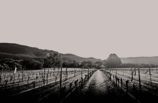 The Gap Vineyard