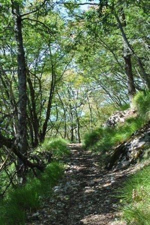 Corfino, إيطاليا: sentiero 56 