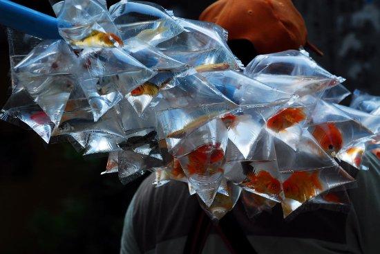 Chai Badan, Tailandia: genialer Fisch Verkäufer