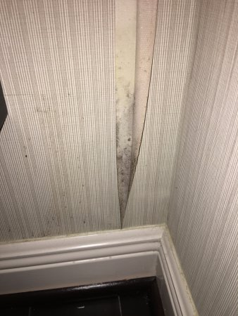 The Whitehall Houston Old Wallpaper Peeling Off And Black Mildew Like Or Mold