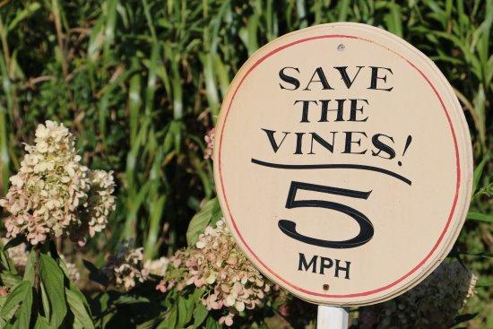 Willow Creek Winery: photo6.jpg