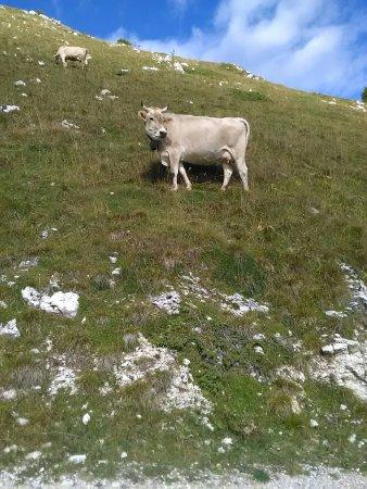Rifugio Monte Baldo: IMG_20160905_112354_large.jpg