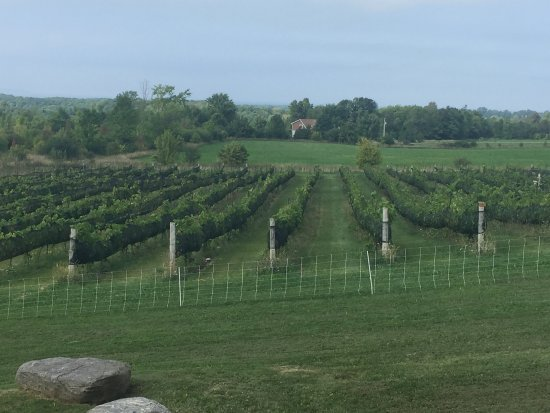 Grey County, Canadá: Coffin Ridge Boutique Winery