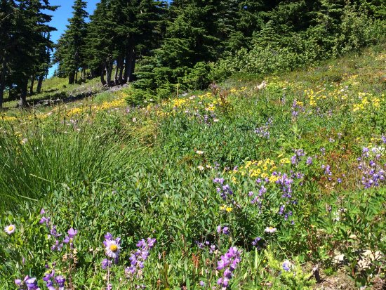 Mount Washington, Canadá: Alpine meadws