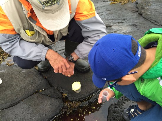 Smith's Cove, Kanada: Viewing the tide pools' tiniest creatures