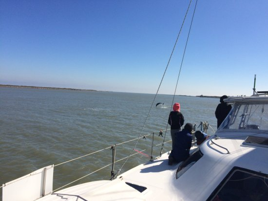 Dolphin Watching Port Aransas Texas Picture Of Sunny Ray Cruises