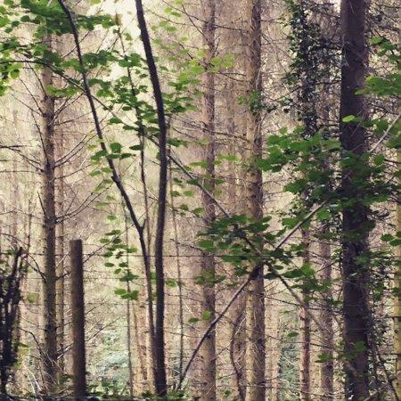 Llangattock, UK: stunning woodland