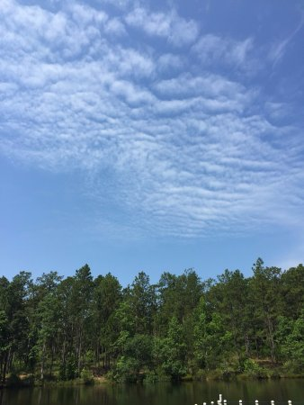 Chipley, FL: Trees & Sky at Falling Waters State Park