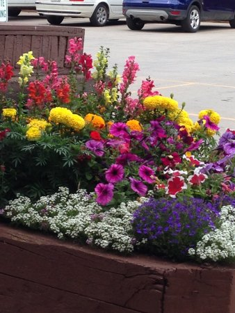 Vail Run Resort: Beautiful flowers all over the property.